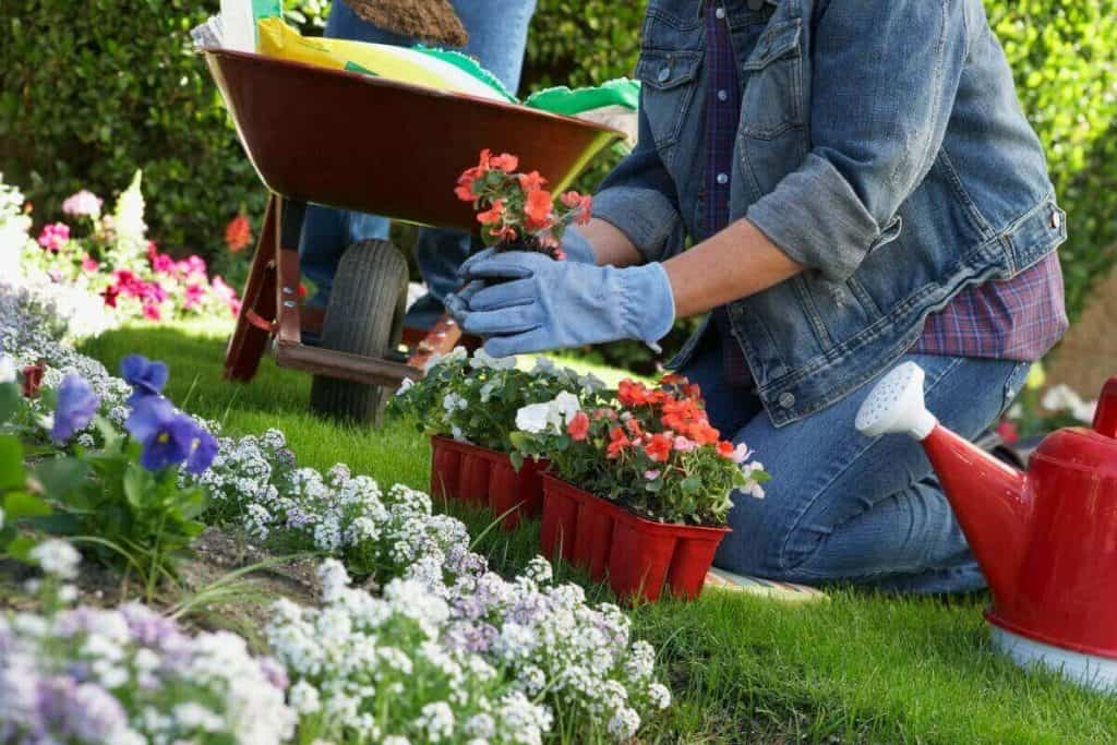 Woman kneeling to plant fresh flowers with wheelbarrow and flower flats