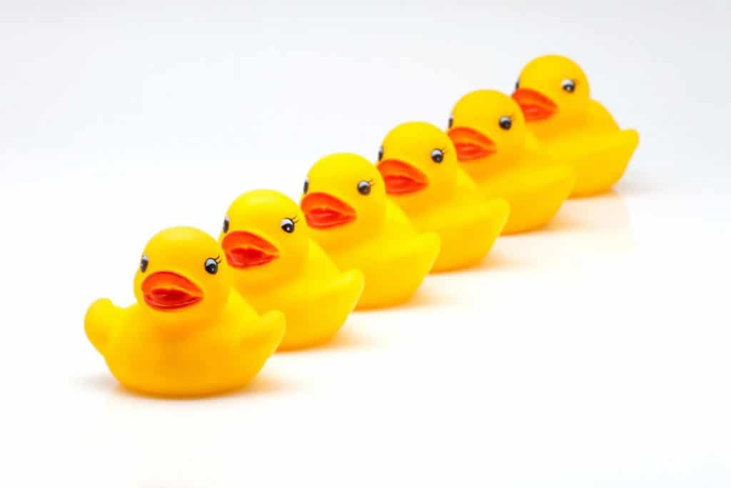 Yellow rubber ducks lined up in a neat row